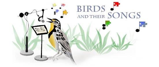 Thư giãn với âm thanh thiên nhiên từ Birdsong.fr